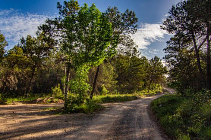 Camí de la Coromina i Pla de la Senyora