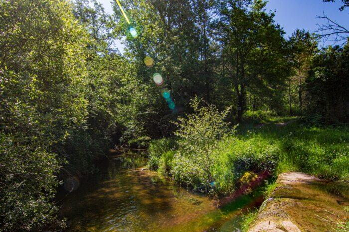 Itinerari de natura per la Riera Gavarresa